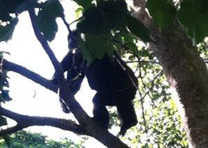 Gorilla Gorilla Tours
