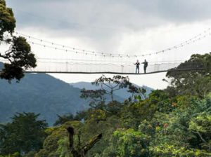 Canopy walk in nyungwe forest