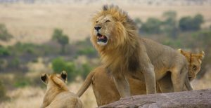 Wildlife safaris in akagera National park