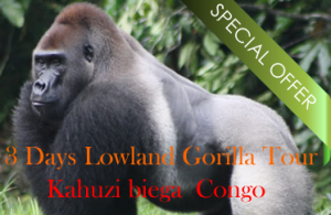3 Days eastern lowland gorilla tour