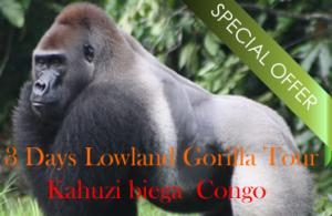 3 Days eastern lowland gorilla tour