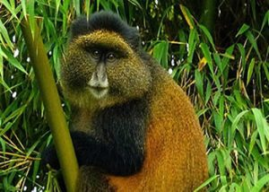 African Primates Tour