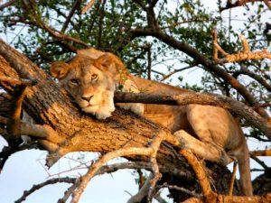 Big Five in Tanzania