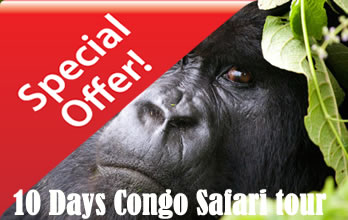 10 Days Congo Gorilla Safari Tour