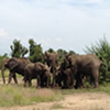Kidepo Wildlife Safari