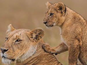 Wildlife Tours in Uganda